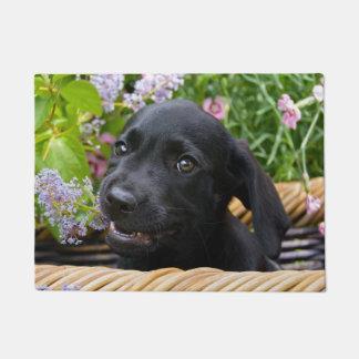 Felpudo Foto negra linda del mascota del perrito del perro