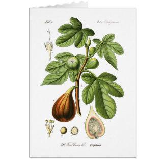 Ficus Carica (higo) Tarjeta De Felicitación