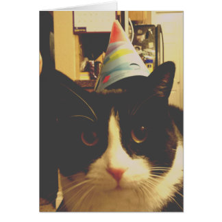 ¡Fiesta de cumpleaños del gato! Tarjeta