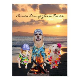 Fiesta de graduación divertida del perro en la pos postal
