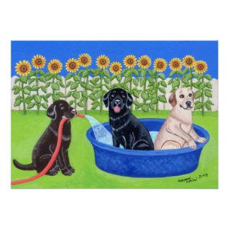 Fiesta en la piscina divertida Labradors Comunicados Personales