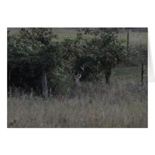 Fila de los ciervos y de la cerca del dólar tarjeta de felicitación