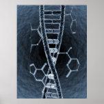 Filamento de la DNA Póster