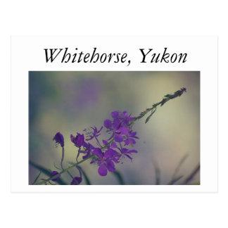 Fireweed, lago Fox, Whitehorse, el Yukón Postal