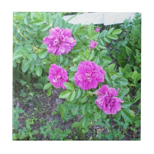 Fkowers rosado azulejo cuadrado pequeño