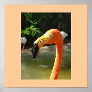 Flamenco con el fondo anaranjado póster