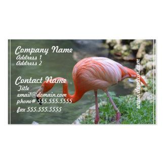 Flamenco delicado plantilla de tarjeta de visita
