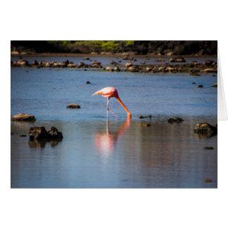 Flamenco rosado en las islas de las Islas Tarjeta