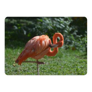 Flamenco rosado perfecto invitación 12,7 x 17,8 cm