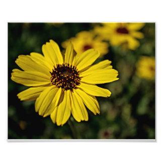 Flor amarilla brillante, margarita fotografia