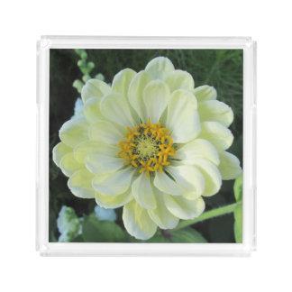 Flor amarilla clara de la dalia bandeja acrílica