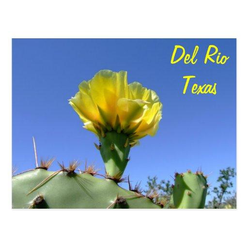 Flor amarilla del cactus de los recuerdos de Del R Postales