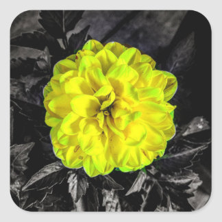 Flor amarilla pegatina cuadrada