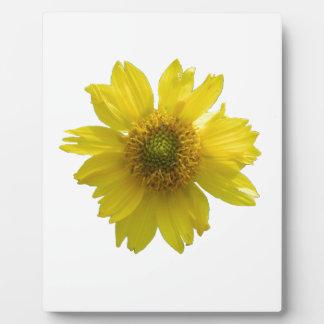 Flor amarilla placa expositora