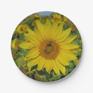 flor amarillo de la flor del sund plato de papel