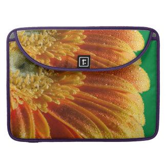 Flor anaranjado con los pétalos coloridos funda para MacBook