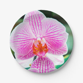 Flor asiática tropical rosada de la orquídea plato de papel