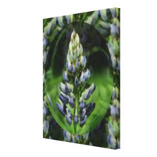 Flor azul del extracto del Lupine