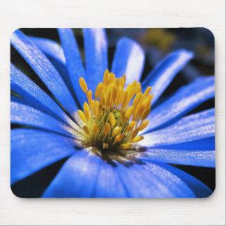 Flor azul hermosa de la anémona alfombrilla de ratón