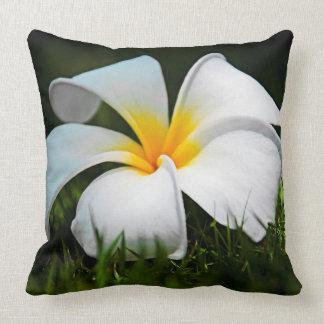 Flor blanca de Hawaii del Frangipani del Plumeria Cojín Decorativo