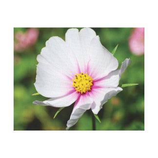 Flor blanca de la foto hermosa del primer lienzo