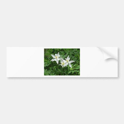 flor blanca de la montaña etiqueta de parachoque
