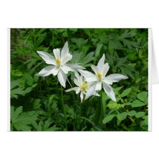 flor blanca de la montaña felicitaciones