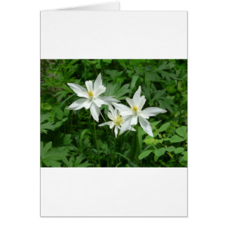 flor blanca de la montaña tarjeta de felicitación