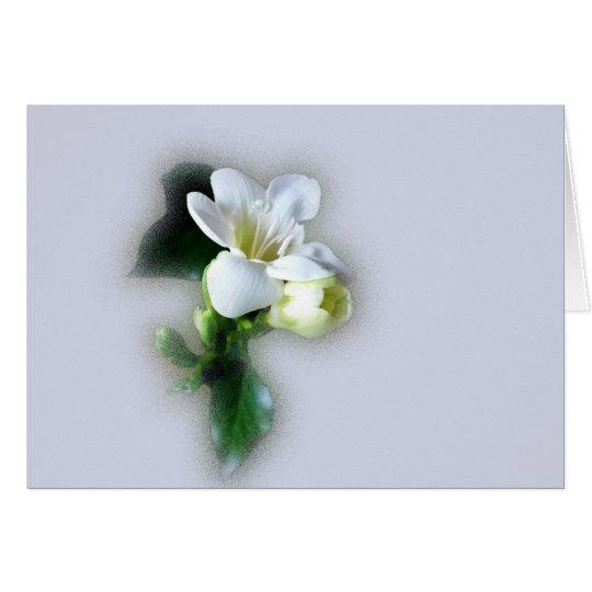 flor blanca del freesia tarjeta de felicitación
