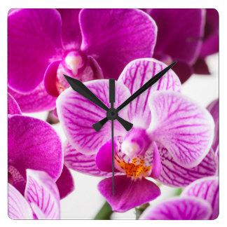 Flor blanca rosada fucsia de la orquídea del reloj cuadrado