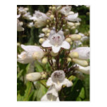 Flor blanca tarjeta postal