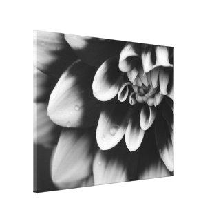 Flor blanco y negro de la flor de la dalia lienzo