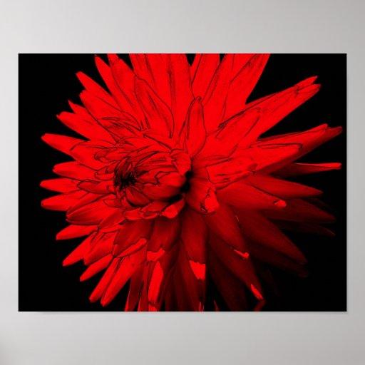 Flor candente de la dalia posters