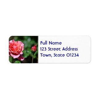 Flor color de rosa rosado magnífico etiqueta de remitente