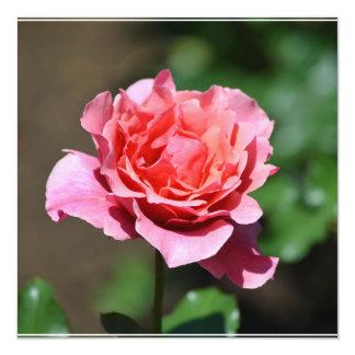 Flor color de rosa rosado magnífico invitación 13,3 cm x 13,3cm