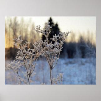 Flor congelada póster