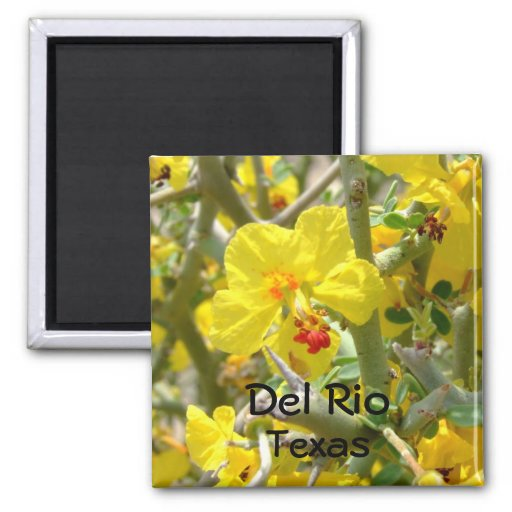 Flor de Allthorn del amarillo del imán de Del Río
