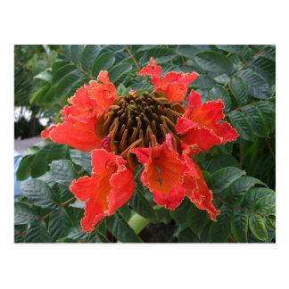 Flor de Belice Postal