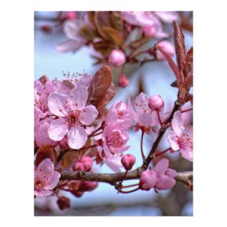 Flor de cerezo Asia Folleto 21,6 X 28 Cm