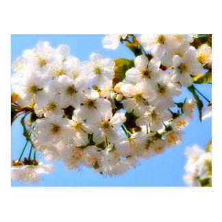 flor de cerezo de la flor de la playa del verano - postal