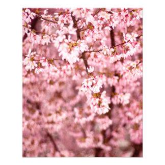 Flor de cerezo de Sakura Folleto 11,4 X 14,2 Cm