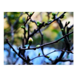 Flor de cerezo del invierno postal