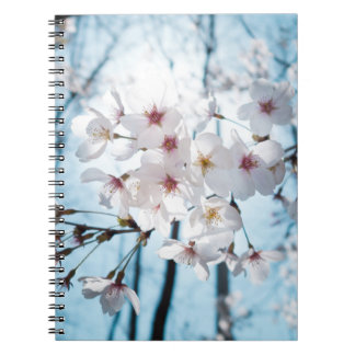 Flor de cerezo del japonés de Asia Cuaderno
