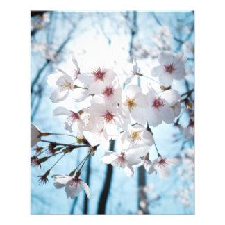 Flor de cerezo del japonés de Asia Folleto 11,4 X 14,2 Cm