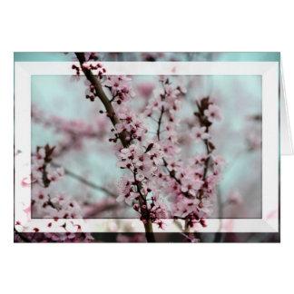 Flor de cerezo hermosa de la primavera tarjeta