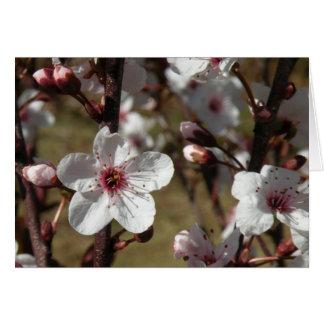 Flor de cerezo japonesa tarjeta pequeña