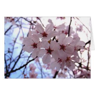 Flor de cerezo Notecard en blanco Tarjeta Pequeña