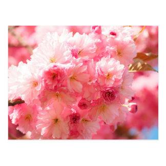 Flor de cerezo rosada postal