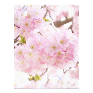 Flor de cerezo Sakura Folleto 21,6 X 28 Cm