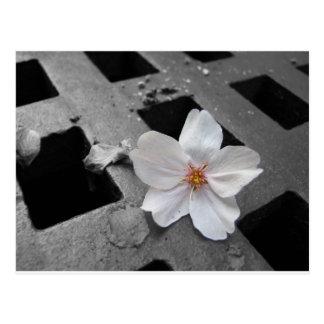 Flor de cerezo y acero postal